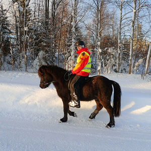 Icelandic Horse Vacation & Husky Sled Tour in Scandinavia