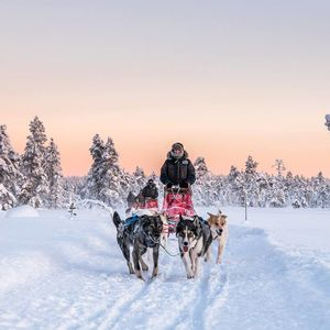 Arctic Trail Husky Safari Through Sweden