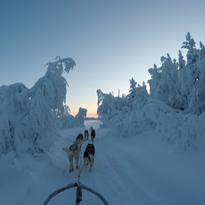 Lapland's wilderness with your own dog sled