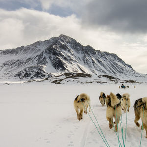 Dog Sledding Greenland tour: expedition adventure