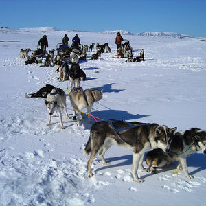 Tour of the Year: Husky sledding for experienced adventures.
