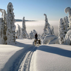 Dog Sledding Tour Scandinavia