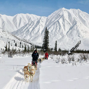 Husky Adventure Tour (7 Day): dog sledding through the stunning Yukon