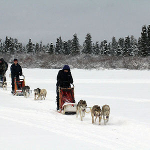 Yukon Quest: toughest slad dog race in the world