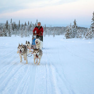 Best of Lapland: action-packed escape full of adventure