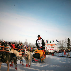 Iditarod Racing Start: one of the largest sled dog race in the world!