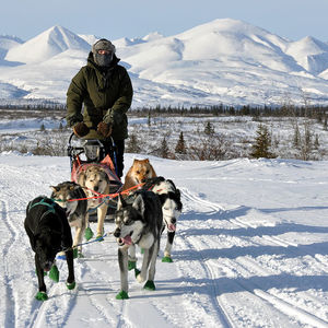 Alaska Sled dog College