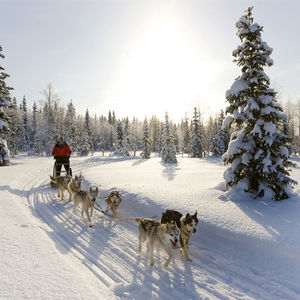 Winter holiday: amazing husky dog sledding tours