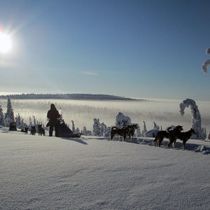 Vindelfjällens Sled Dog Expedition: Europe´s last wilderness