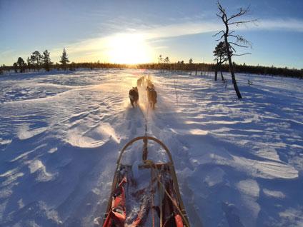 Trails of Lapland Huskyfarm Tväråträsk AB: Husky Tours in