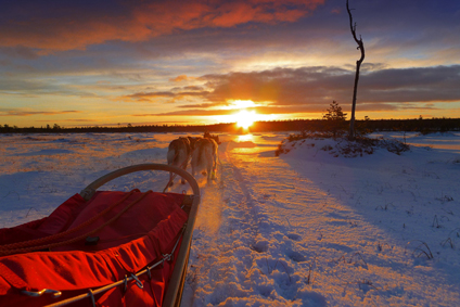 Trails of Lapland Huskyfarm Tväråträsk AB: Husky Tours in